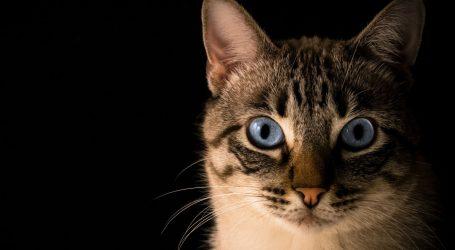 Ruski mačak spašen je iz smeća, sada sjedi u ministričinoj fotelji