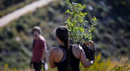 Trillion Tree: Nastavlja se globalna kampanja pošumljavanja