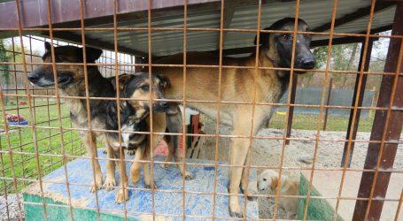 Zbog hladnoće kinesko sklonište za životinje primilo 400 pasa lutalica