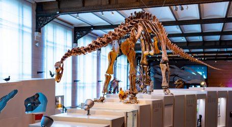 Argentina: Arheolozi otkrili kosti najveće vrste dinosaura