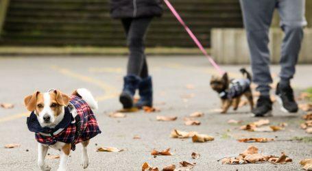 Zbog šetanja pasa bez povodca u Splitu podijeljene 42 kazne