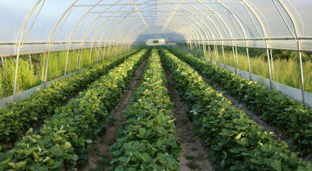 Natječaj Ministarstva poljoprivrede: Proizvođačima povrća u plastenicima 150 milijuna kuna