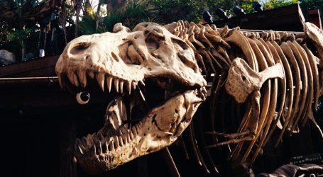 Kina: Otkriveno mnogo otisaka dinosaura iz razdoblja kasne krede