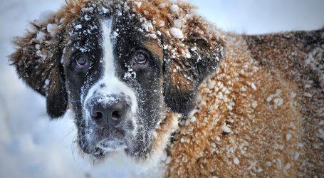 Švicarska: Psi lavežom spasili vlasnike zatrpane lavinom