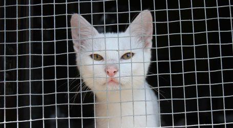 Cipar: Sklonište za životinje Tala Cats brine za čak 850 mačaka