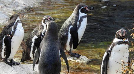 Život u ZOO vrtu: Neke životinje vani na snijegu, neke u toplom, s podnim grijanjem