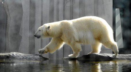 Za polarnu medvjedicu Marthu priređena gozba