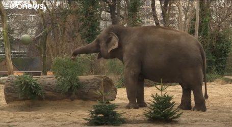 Gozba u zoološkom vrtu, životinje se časte odbačenim božićnim drvcima
