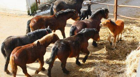 Sunja: Ubio osam konja na ispaši