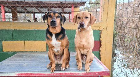 """Prijatelji životinja: """"Novim Pravilnikom lakše je otvoriti sklonište za napuštene životinje. Molimo općine i gradove da to čuju"""""""