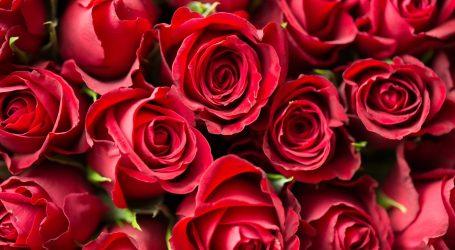 ISTRAŽIVANJE Valentinovo 2021: Romantična večera u dvoje doma, cvijeće i online ljubav