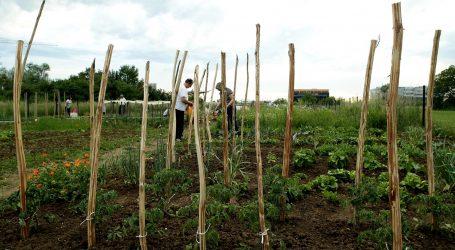 Kina: Planinsko područje pretvoreno u zonu ekološke poljoprivrede