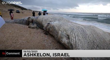 Lešina kita pronađena u Nacionalnom parku Aškelon