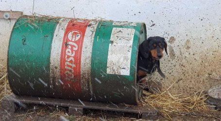Na Baniji: Besplatno mikročipiranje, cijepljenje i kastracija pasa. Donacija kućica za pse ili preudomljavanje