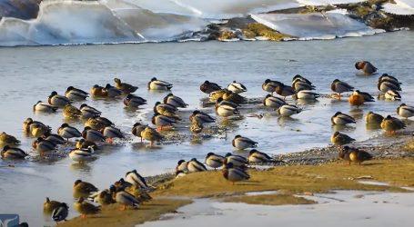 Kina: Ptice selice čekaju toplije dane kako bi nastavile put