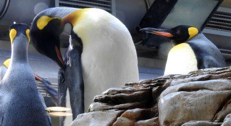 Pingvini 'inspektori' pregledali zoološki vrt u Saint Louisu