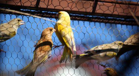 Pariz: Gradsko vijeće glasovalo za zatvaranje povijesne ptičje tržnice