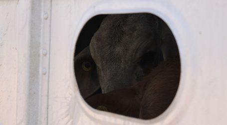 CIPAR Tisuće grla bolesnih goveda mjesecima zatvoreni u dva broda. Ne puštaju ih, niti zovu veterinare