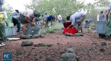 Više od 190 galapagoških kornjača pušteno u divljinu otoka Santa Fé