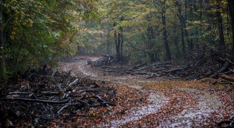 Svjetski dan divljih vrsta ove godine posvećen šumskim ekosustavima
