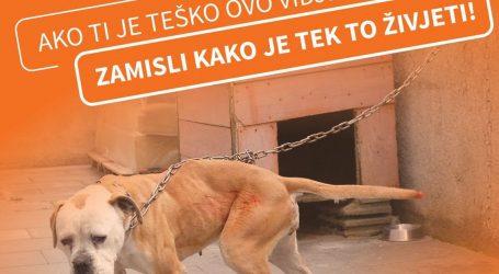 Pas na lancu živi u teškoj patnji i agoniji. Čovjek je centar njegova svemira, zavezan i zapušten ne može mu služiti