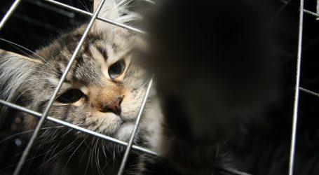 Colorado će zakonom zabraniti eutanaziju životinja u skloništima