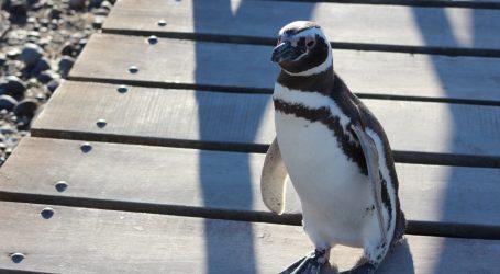 Humboldtovi pingvini posjetili set legendarne serije 'Prijatelji'