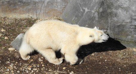 Zoološki vrt u Kopenhagenu otvorio svoja vrata za posjetitelje