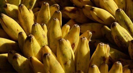 Policija prekinula narkolanac: U Opuzenu zaplijenili sto kilograma kokaina skrivenih među bananama