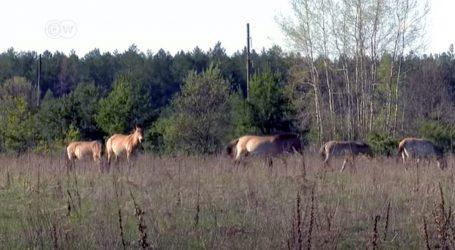 Černobil ima status rezervata biosfere, postao je stanište mnogim životinjama