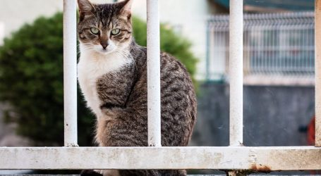 Panama: Mački privezali vrećicu s drogom oko vrata i poslali je u zatvor Nova Nada