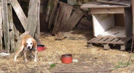 Pomoć najboljem čovjekovom prijatelju: Udruga gradova podržala zabranu pasa na lancu