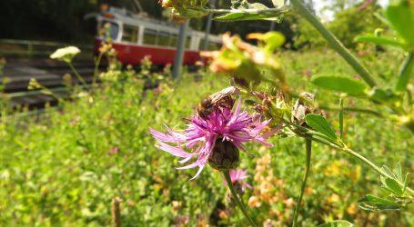 U Beču živi 200 milijuna pčela, povećat će njihov broj naseljavanjem novih zajednica na livade uz pruge