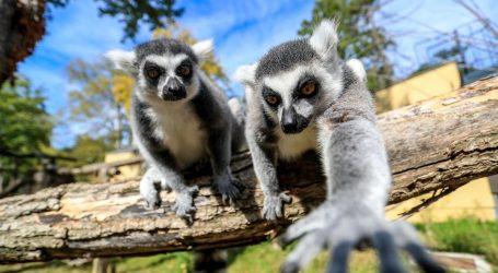 U zagrebačkom Zoološkom vrtu kreće Noćni safari