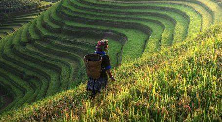 Preminuo 'otac hibridne riže', čovjek koji je pomogao nahraniti Kinu