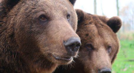 Incident u Istočnoj Engleskoj: Smeđi medvjedi eutanazirani nakon bijega iz zoološkog vrta