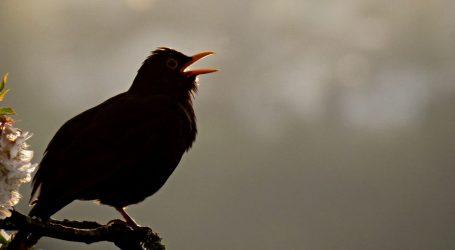 Studija pokazala: Zbog onečišćenja prometnom bukom ptice ne pjevaju isto kao prije