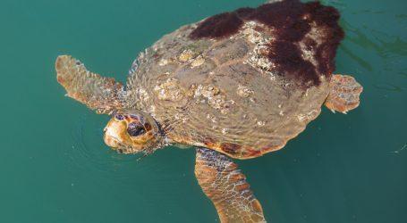 Dubai: Hoteli, tvrtke i organizacije se ugovorima obvezali zaštititi ekosustave
