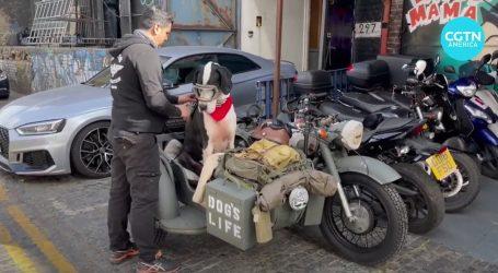 Pseći život: Doga Diego uživa u vožnji starinskim motociklom