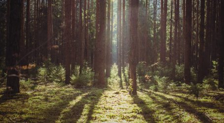Istraživanje: Ekstrakt kore bora pomaže kod dječje hiperaktivnosti