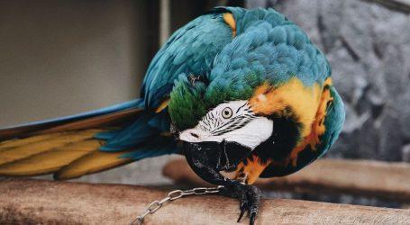 Italija zabranjuje uvoz papagaja, armadila, gmazova, vodozemaca i drugih egzotičnih životinja