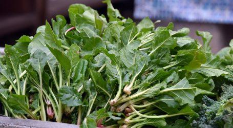 Klorofil iz povrća pomaže kod suzbijanja akni