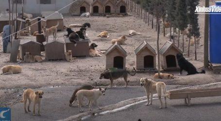 'Šapa selo' u Ankari udomljava napuštene i ozlijeđene pse