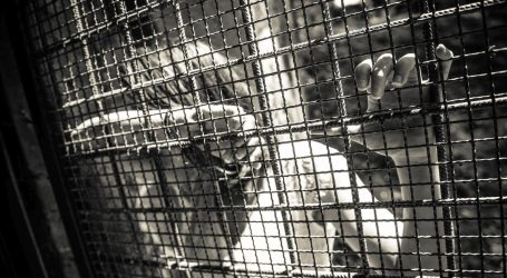 DOSSIER: DJECA KRIMINALCI: Čak 37 posto više kaznenih djela