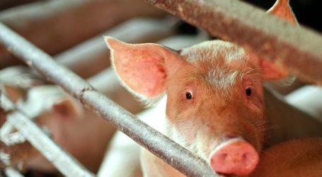 """""""Početak novog vremena"""": EU zabranila kavezni uzgoj životinja za hranu"""