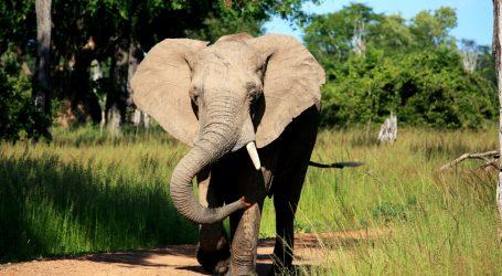 Tajlandskoj obitelji u kuću redovito dolazi slon, kuhinja mu je omiljena prostorija
