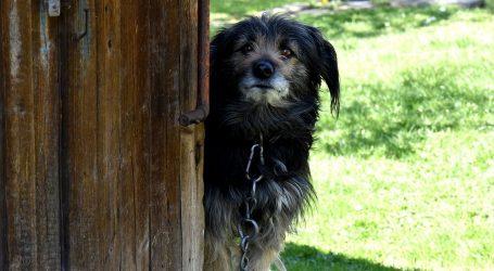HGSS-a podržao kampanju za zabranu držanja pasa na lancu