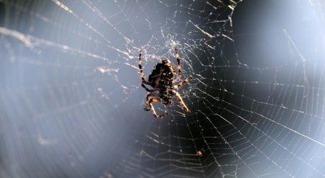 Australsku regiju nakon poplava zadesila invazija pauka