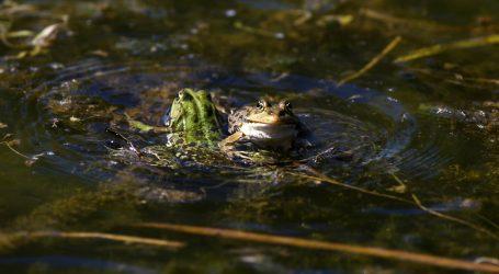 Michael Mahony, australski stručnjak za vodozemce, poznat je kao 'šaptač žabama'