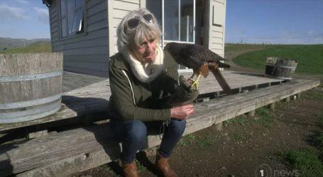 Novi Zeland: Diana Dobson, žena kojoj je život briga o sokolovima